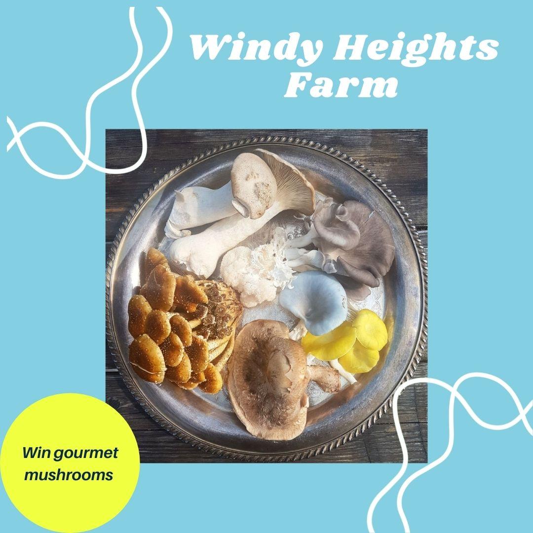Windy Heights Farm